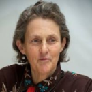 Temple Grandin Cover